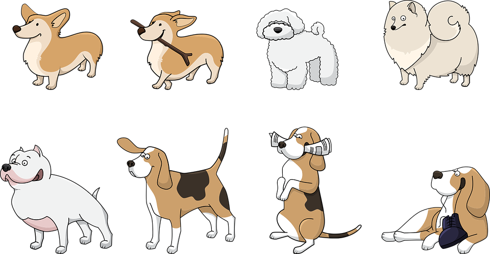 comparador-seguros-para-perros