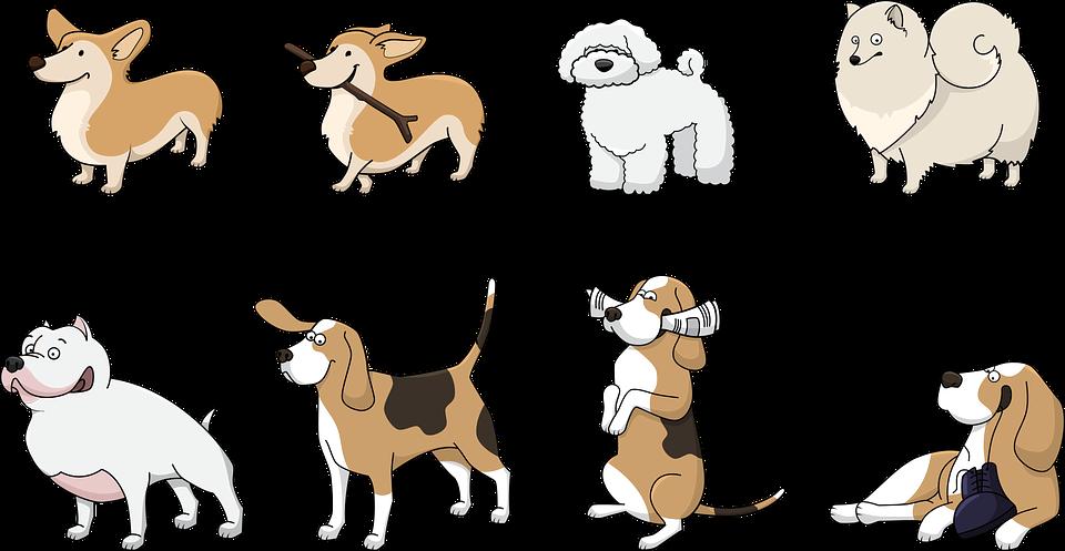 comparador-seguros-mascotas