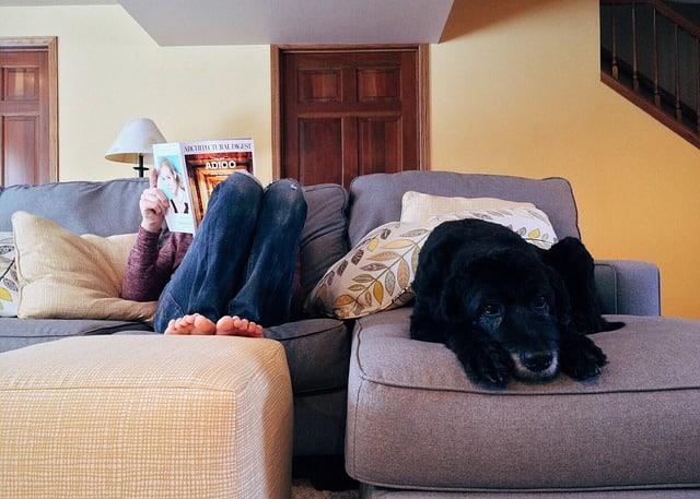 perros-seguro-alquiler