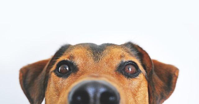 seguro-perros-rc